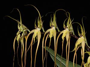 Orchideen Pflege Orchideen Forum