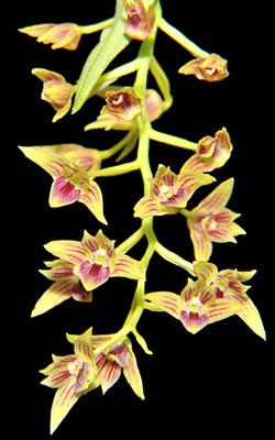Orchideen Pflege Nach Der Blute Orchideen Forum