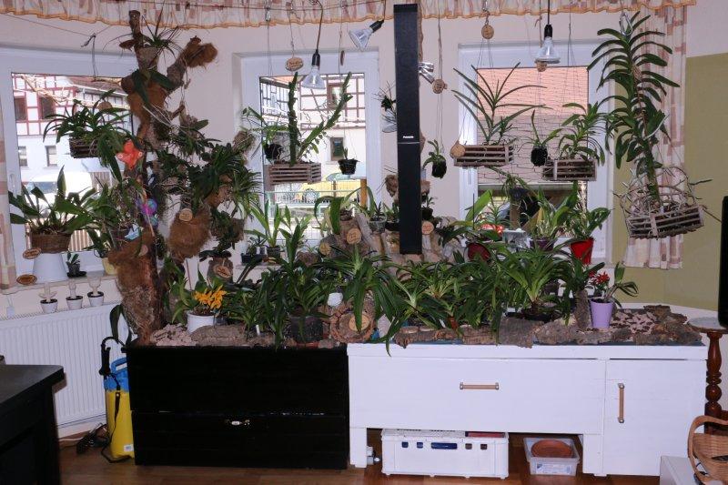 Orchideen Auf Der Fensterbank Orchideen Forum
